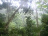 junglezichtje op weg naar de khun korn waterval