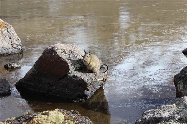 Kangaroe-konijn?? En ja er ligt ijs op het water...