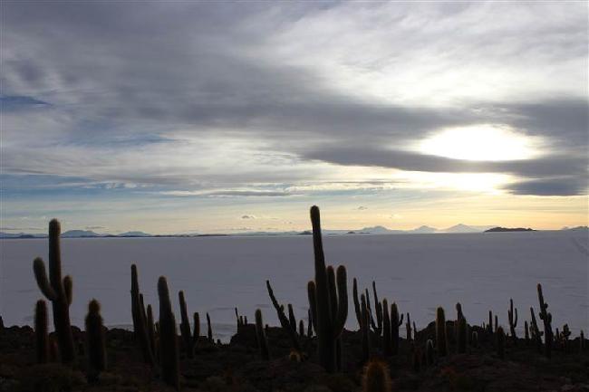 cactus eiland