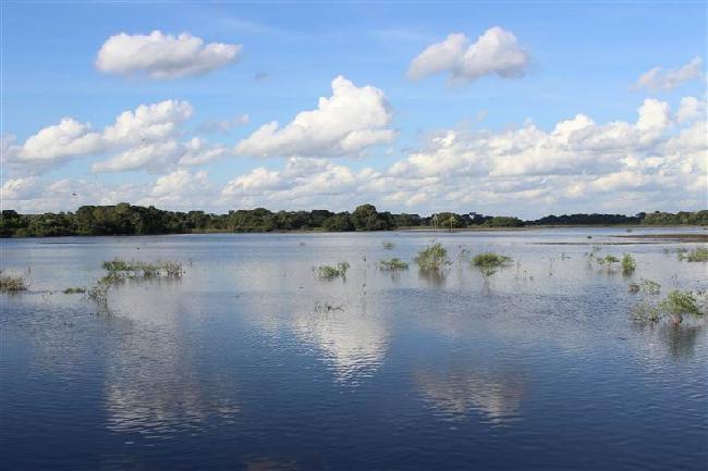 De Pantanal