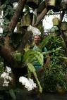 Erik in de Botanische tuin