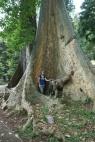 Botanische tuin in Bogor met Anne tussen de wortels