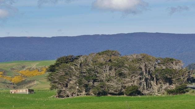 flexibele bomen haha