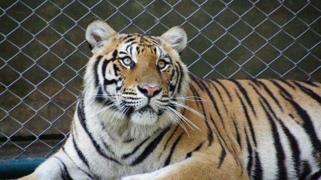 geweldige dieren!!!
