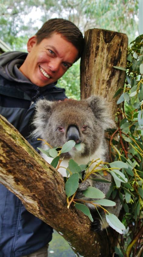 Koala's spotten in Cleveland National Park