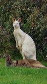 duo pennoti kangoeroes :)