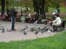 Hier hebben ze ook veel duifjes.