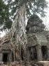 Jungle Wat