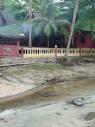 Plaatselijke grote gecko's...zwommen achter ons hutje