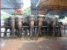 olifantenshow